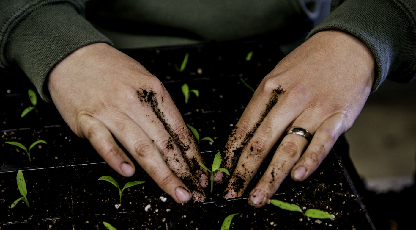 planting-hands